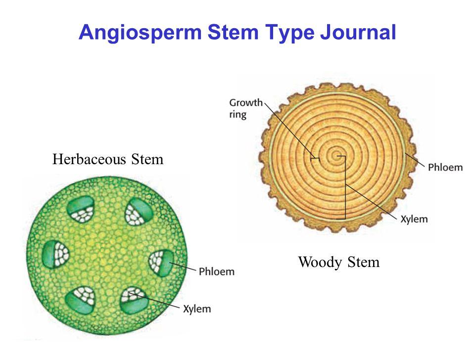 Angiosperm Stem Type Journal