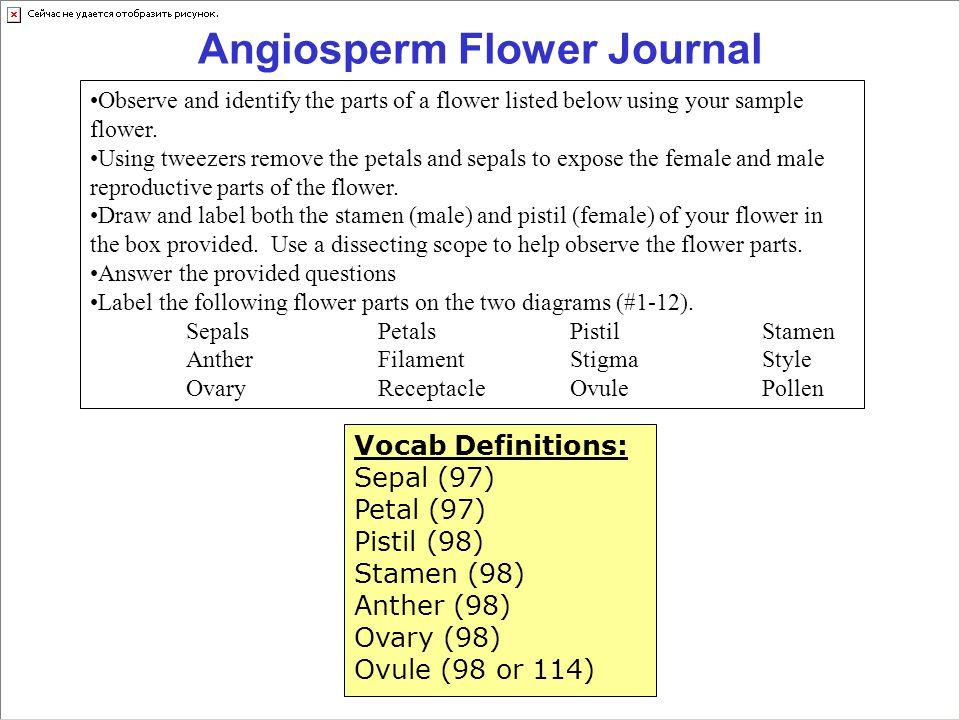 Angiosperm Flower Journal