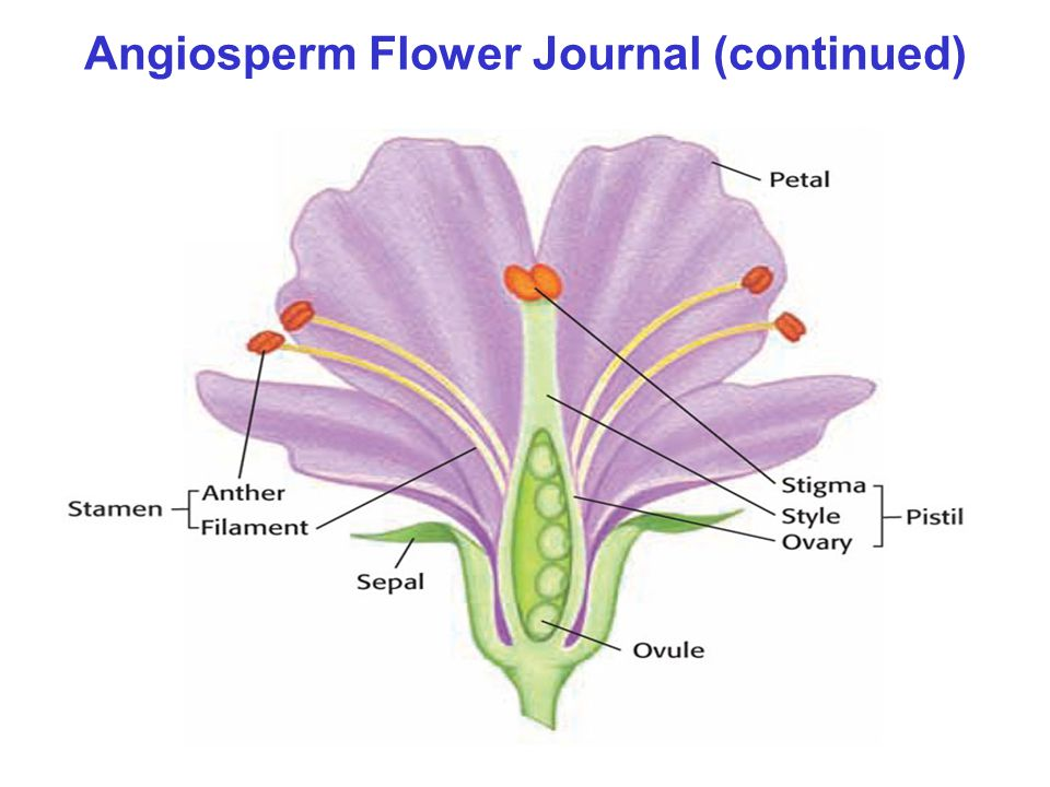 Angiosperm Flower Journal (continued)