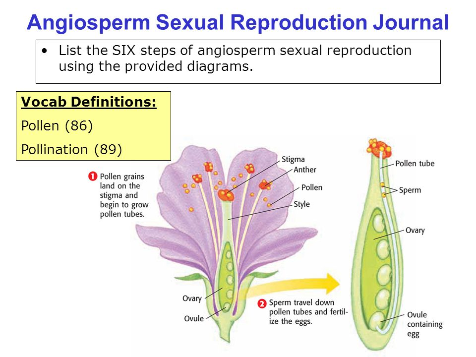 Angiosperm Sexual Reproduction Journal