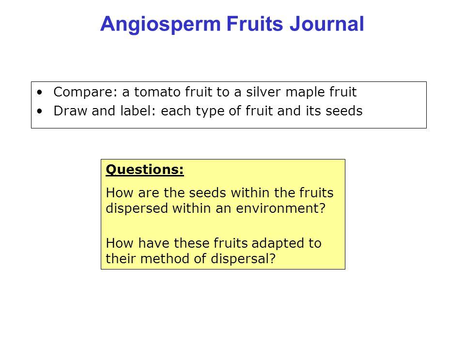 Angiosperm Fruits Journal