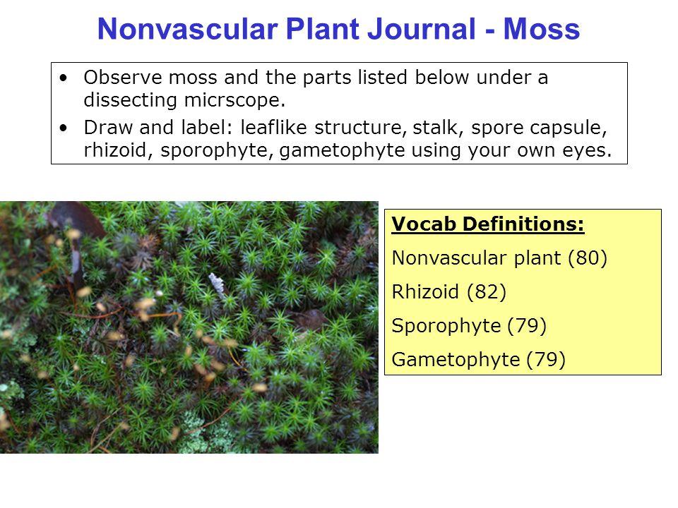 Nonvascular Plant Journal - Moss