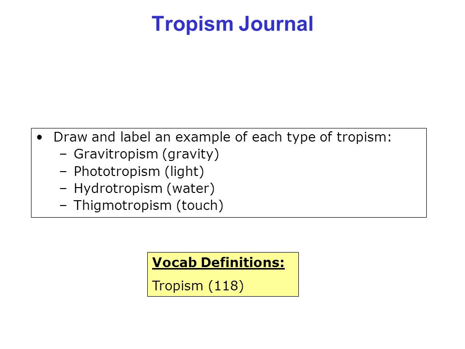 Tropism Journal Draw and label an example of each type of tropism:
