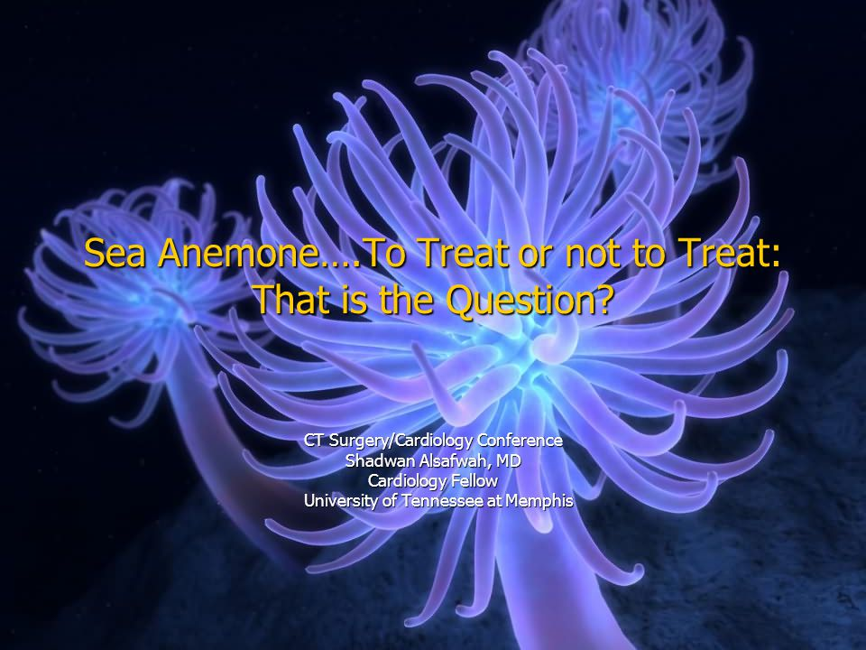 Sea Anemone….To Treat or not to Treat: That is the Question