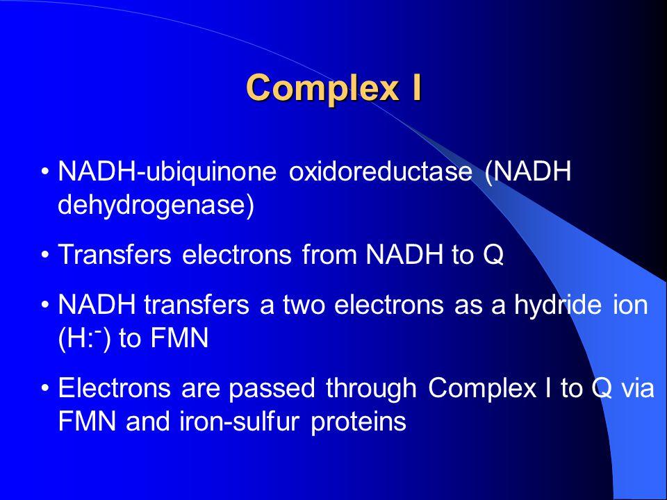 Complex I NADH-ubiquinone oxidoreductase (NADH dehydrogenase)