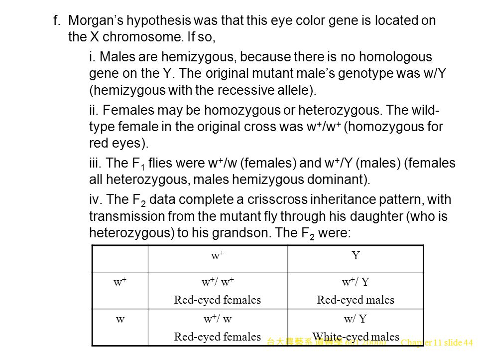 f. Morgan's hypothesis was that this eye color gene is located on the X chromosome. If so,