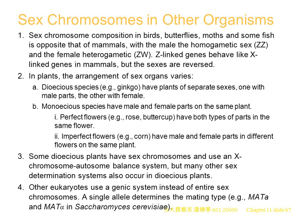Sex Chromosomes in Other Organisms