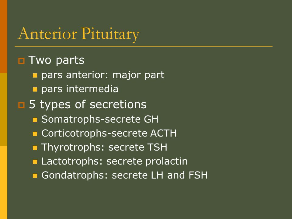 Anterior Pituitary Two parts 5 types of secretions