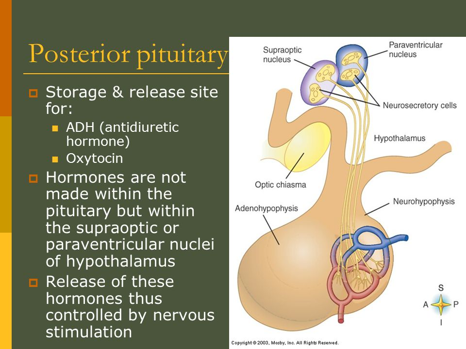 Posterior pituitary Storage & release site for: