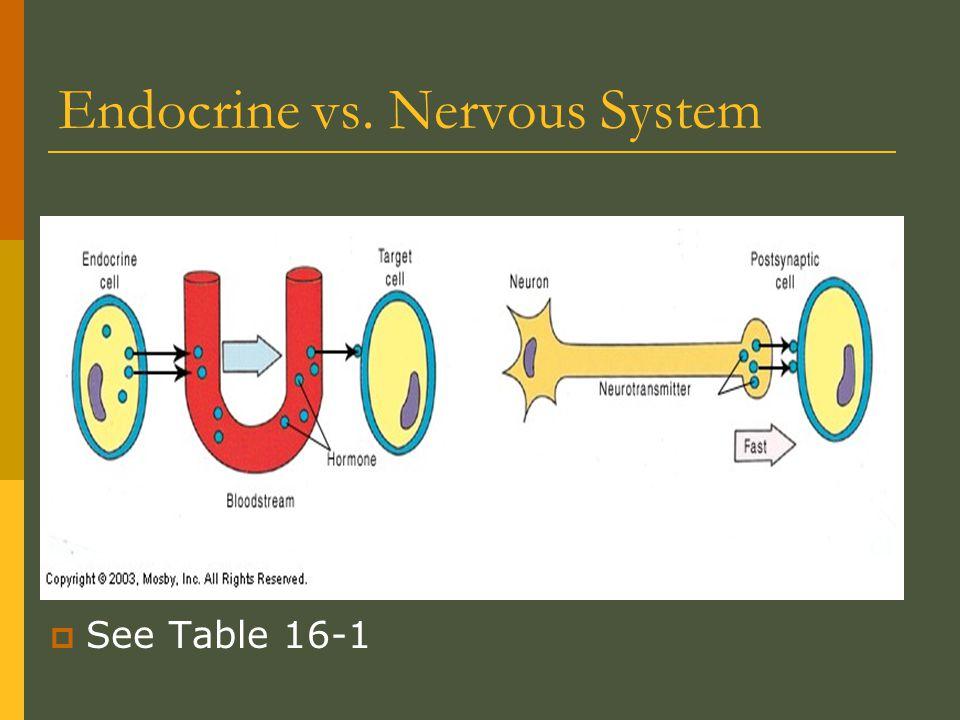 Endocrine vs. Nervous System