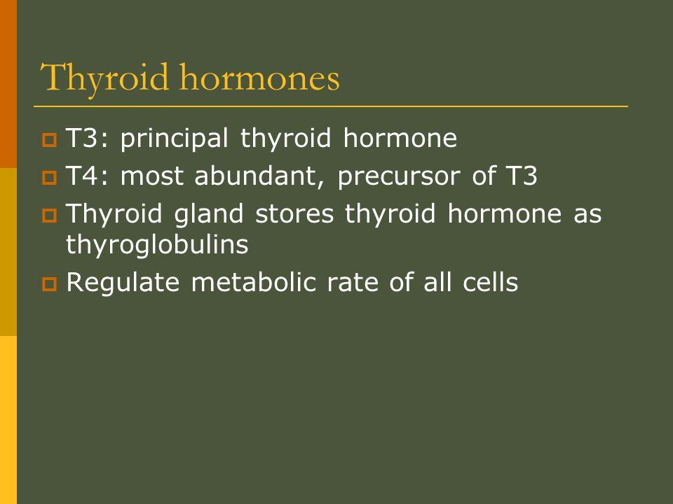 Thyroid hormones T3: principal thyroid hormone