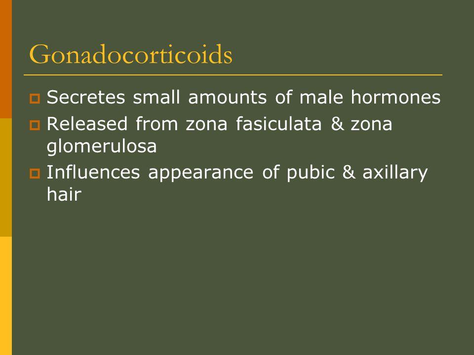 Gonadocorticoids Secretes small amounts of male hormones