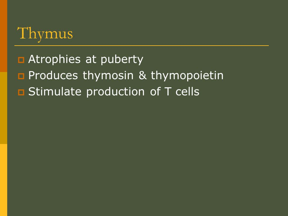 Thymus Atrophies at puberty Produces thymosin & thymopoietin