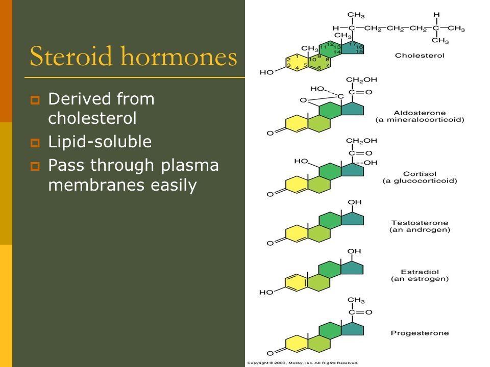 Steroid hormones Derived from cholesterol Lipid-soluble
