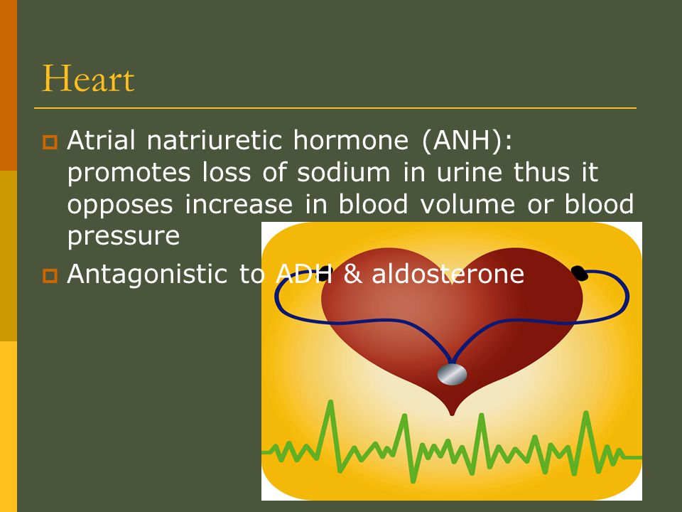 Heart Atrial natriuretic hormone (ANH): promotes loss of sodium in urine thus it opposes increase in blood volume or blood pressure.