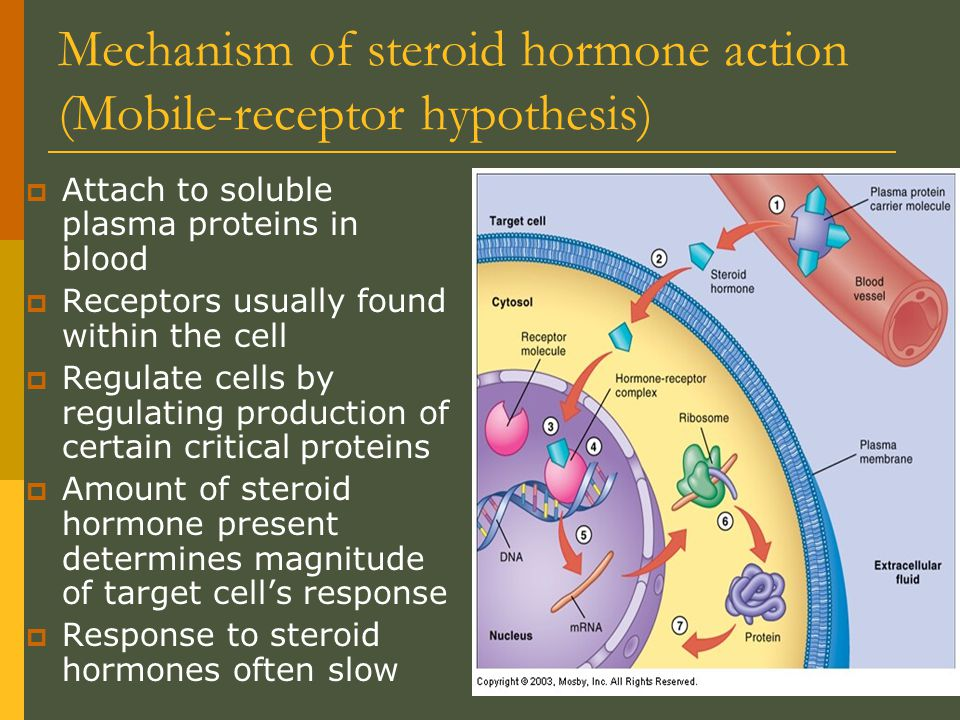 Mechanism of steroid hormone action (Mobile-receptor hypothesis)