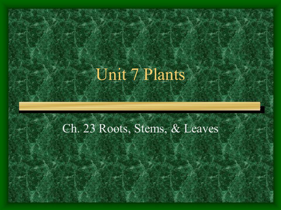 Unit 7 Plants Ch. 23 Roots, Stems, & Leaves