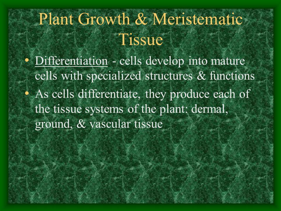 Plant Growth & Meristematic Tissue