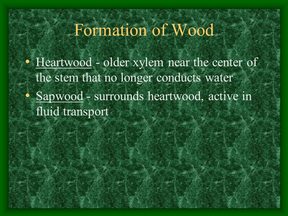 Formation of Wood Heartwood - older xylem near the center of the stem that no longer conducts water.