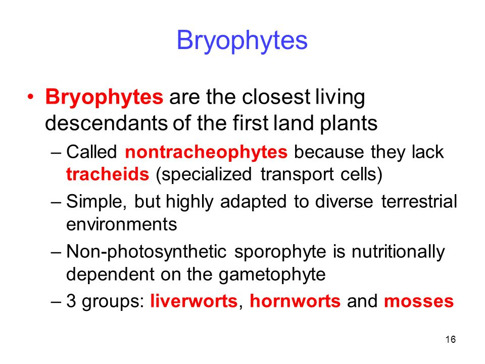 Bryophytes Bryophytes are the closest living descendants of the first land plants.