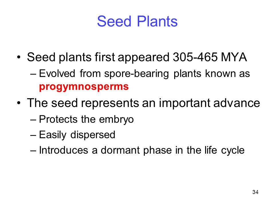 Seed Plants Seed plants first appeared 305-465 MYA