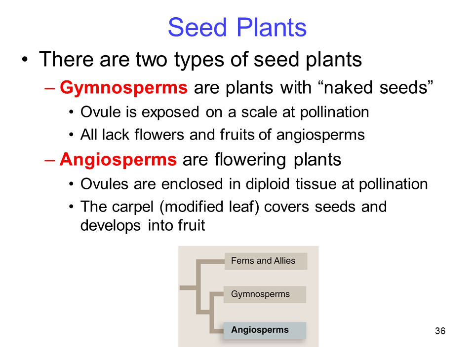 Seed Plants There are two types of seed plants