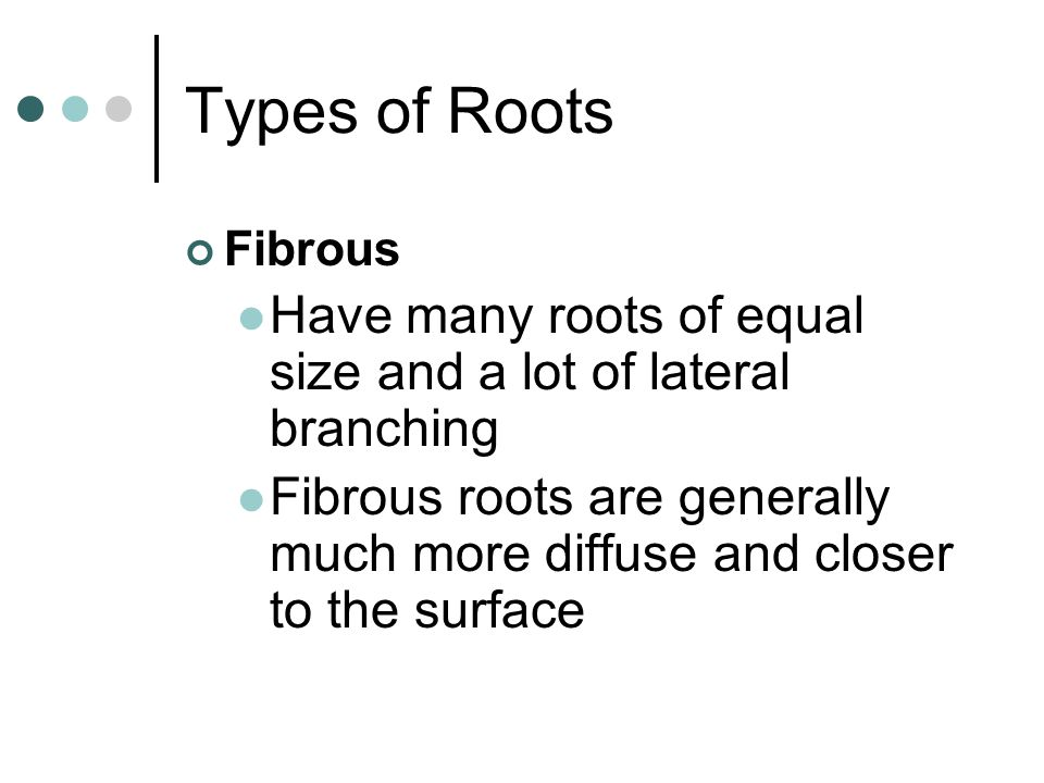 Types of Roots Fibrous. Have many roots of equal size and a lot of lateral branching.