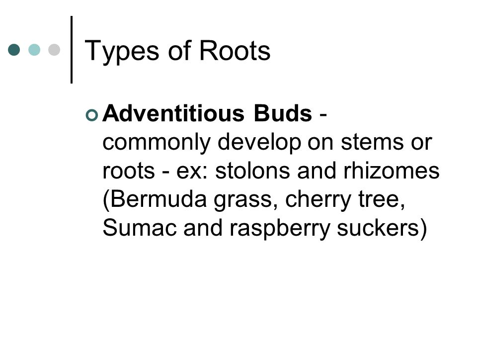 Types of Roots
