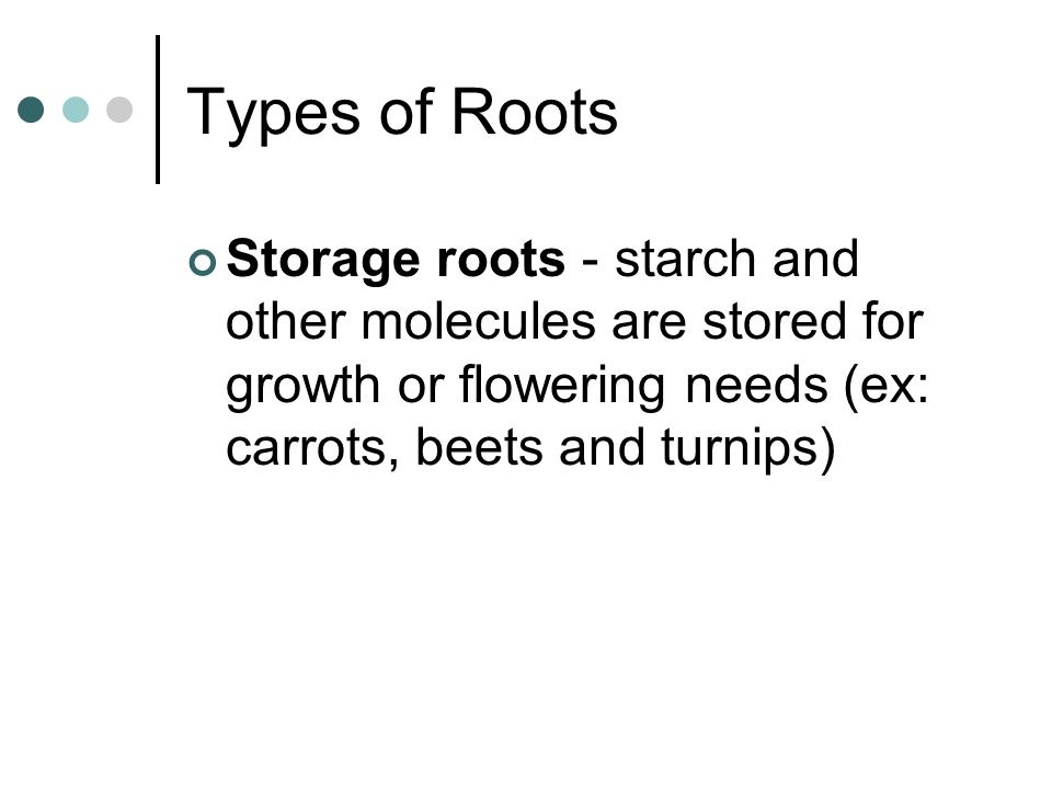 Types of Roots Storage roots - starch and other molecules are stored for growth or flowering needs (ex: carrots, beets and turnips)