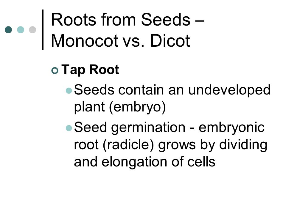 Roots from Seeds – Monocot vs. Dicot