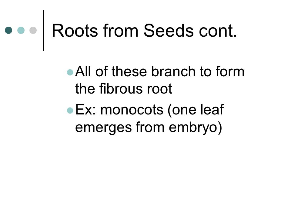 Roots from Seeds cont. All of these branch to form the fibrous root