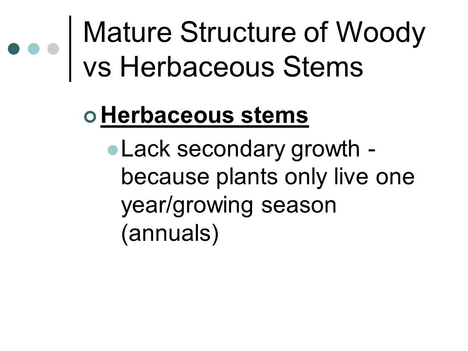 Mature Structure of Woody vs Herbaceous Stems
