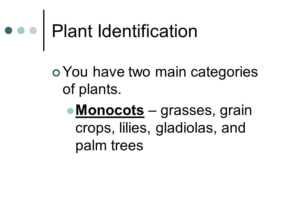 Plant Identification You have two main categories of plants.