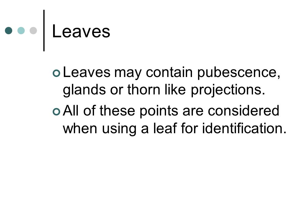 Leaves Leaves may contain pubescence, glands or thorn like projections.