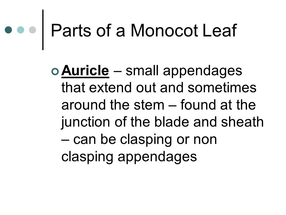 Parts of a Monocot Leaf