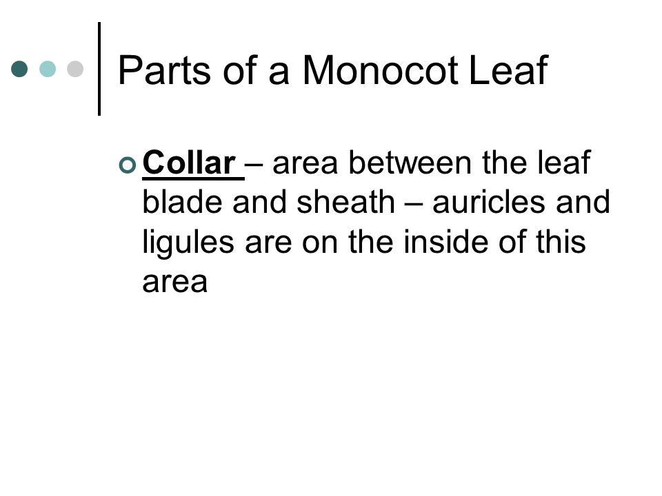 Parts of a Monocot Leaf Collar – area between the leaf blade and sheath – auricles and ligules are on the inside of this area.