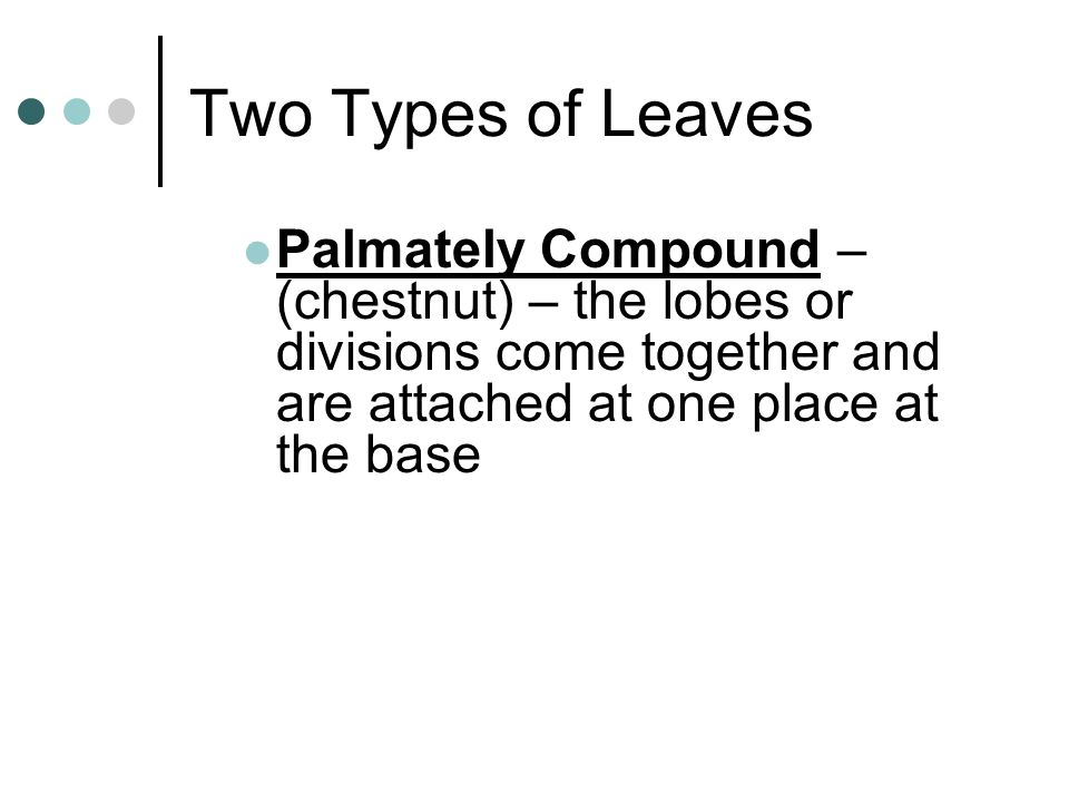 Two Types of Leaves Palmately Compound – (chestnut) – the lobes or divisions come together and are attached at one place at the base.