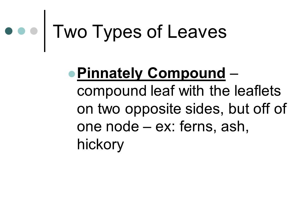 Two Types of Leaves Pinnately Compound – compound leaf with the leaflets on two opposite sides, but off of one node – ex: ferns, ash, hickory.