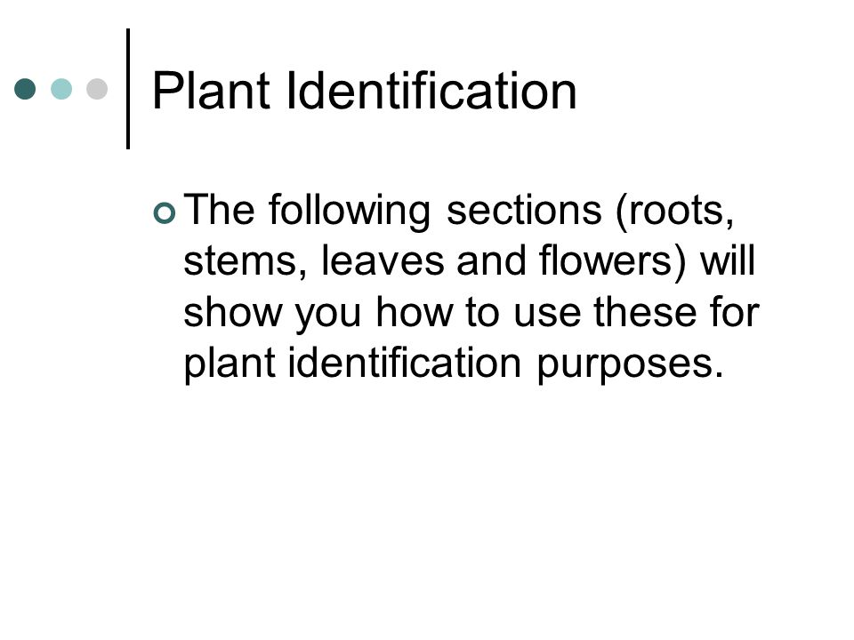 Plant Identification The following sections (roots, stems, leaves and flowers) will show you how to use these for plant identification purposes.