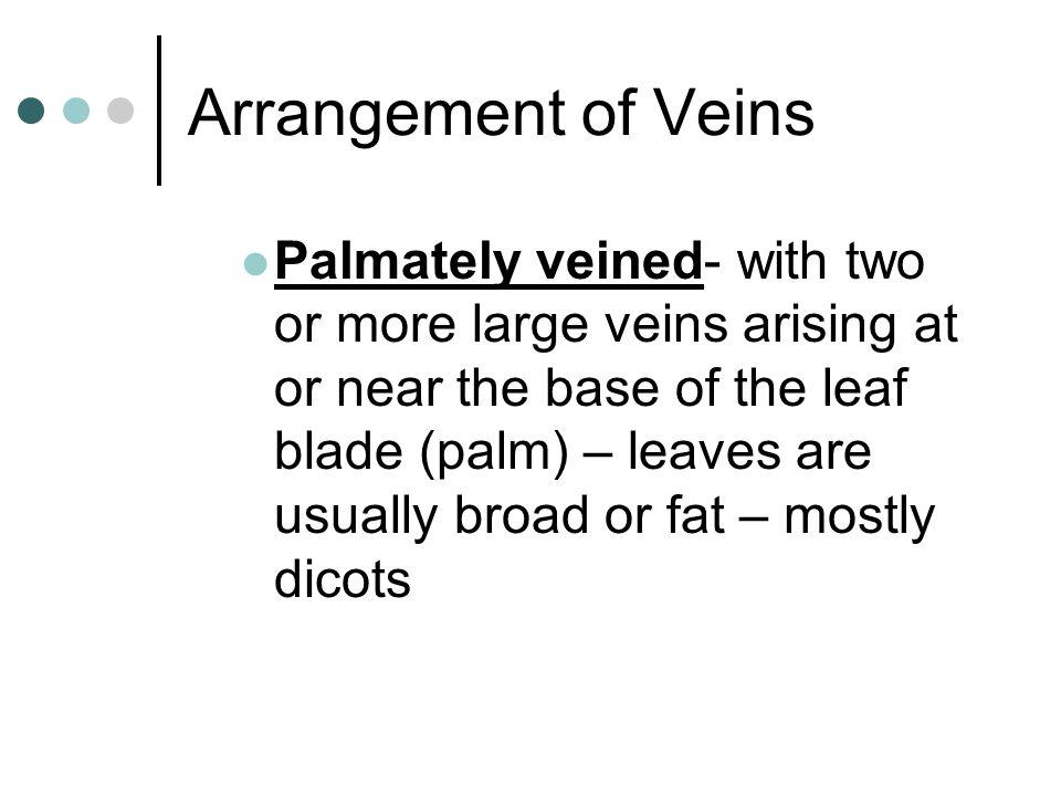Arrangement of Veins