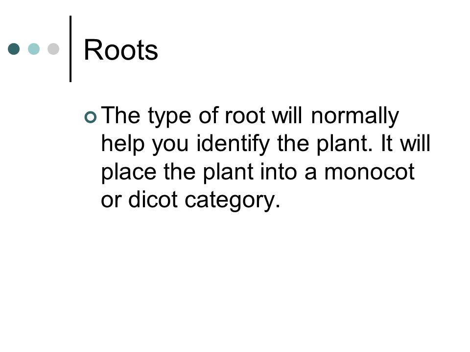 Roots The type of root will normally help you identify the plant.