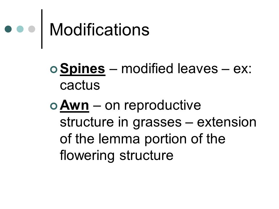 Modifications Spines – modified leaves – ex: cactus