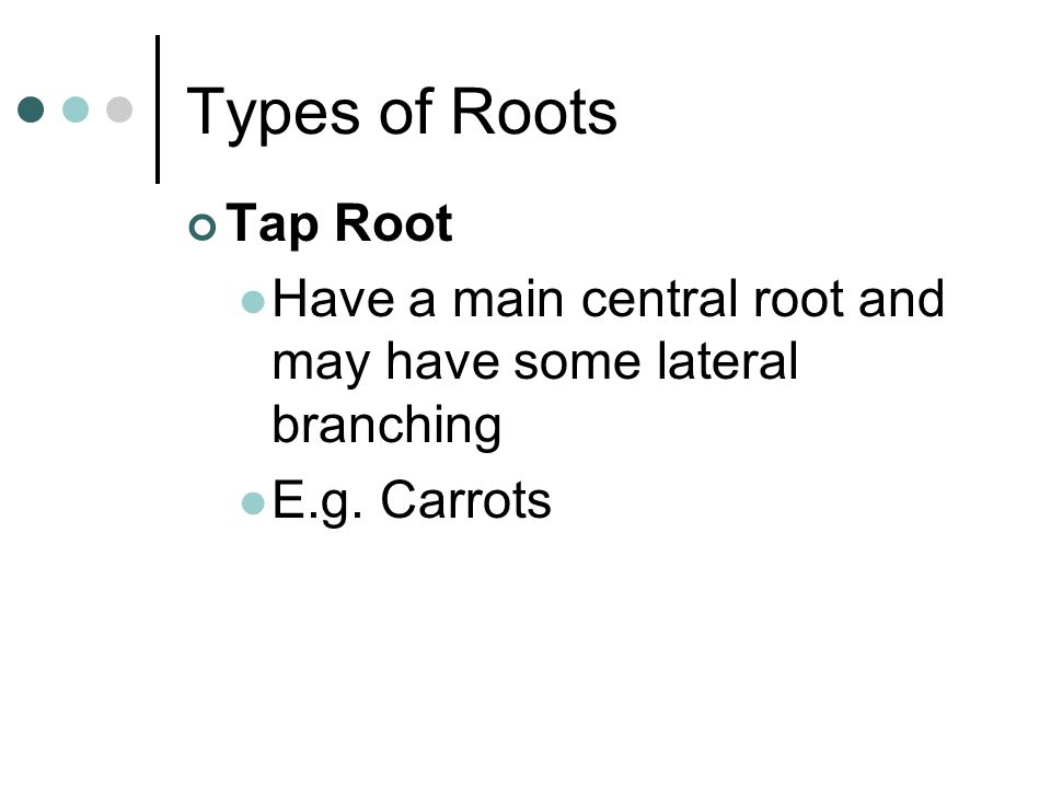 Types of Roots Tap Root Have a main central root and may have some lateral branching E.g. Carrots