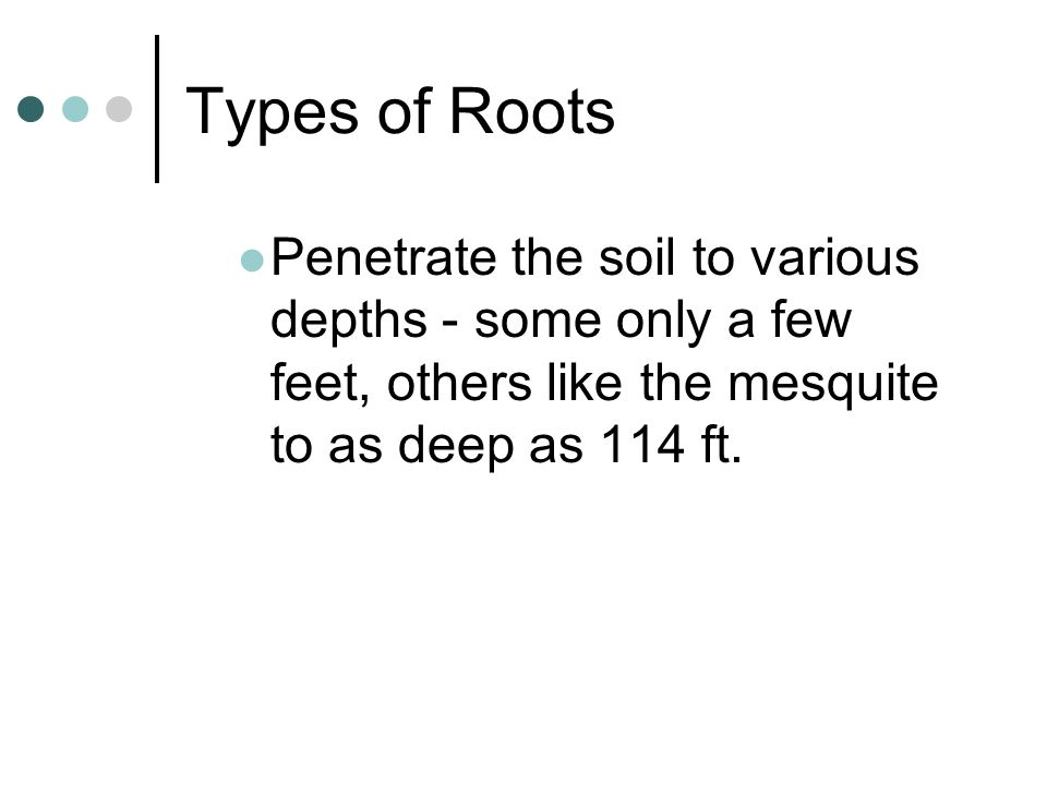 Types of Roots Penetrate the soil to various depths - some only a few feet, others like the mesquite to as deep as 114 ft.