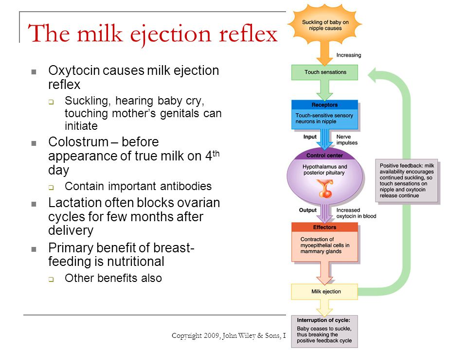 The milk ejection reflex