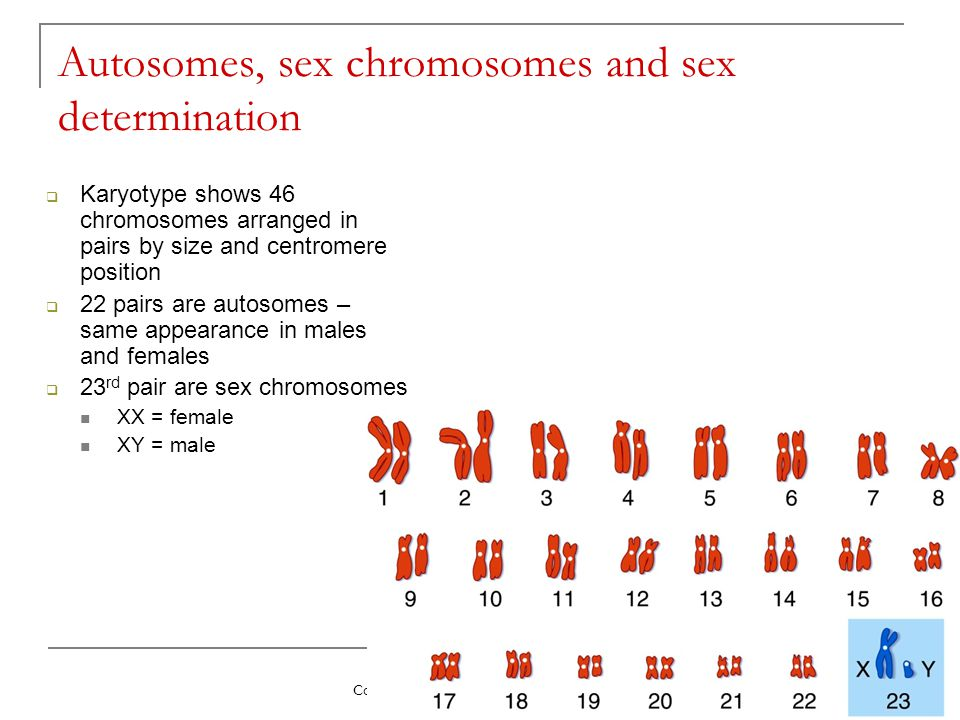 Autosomes, sex chromosomes and sex determination