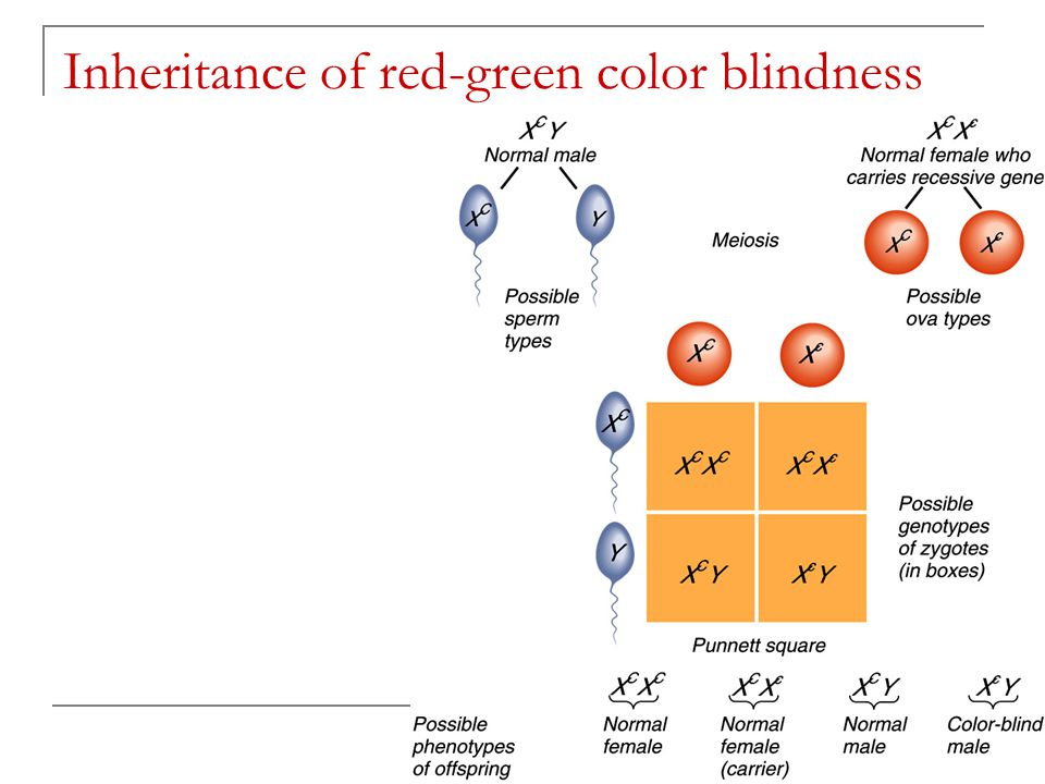 Inheritance of red-green color blindness