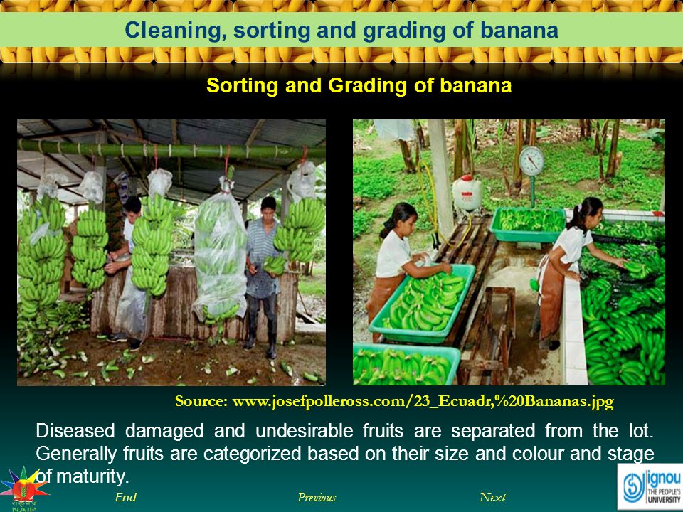 Sorting and Grading of banana