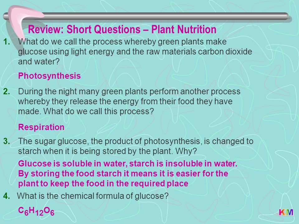 Review: Short Questions – Plant Nutrition