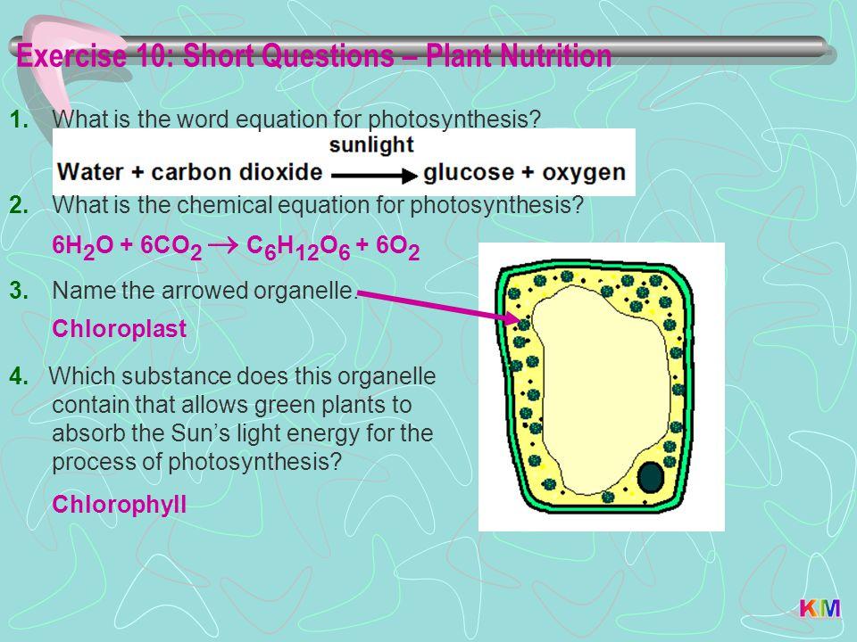 Exercise 10: Short Questions – Plant Nutrition